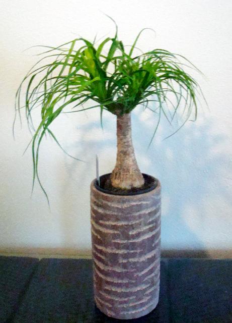 Planta_4d5c00af99a1c