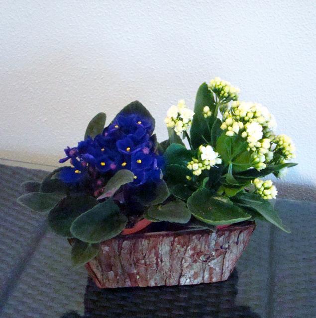 Planta_4d5c015258abf